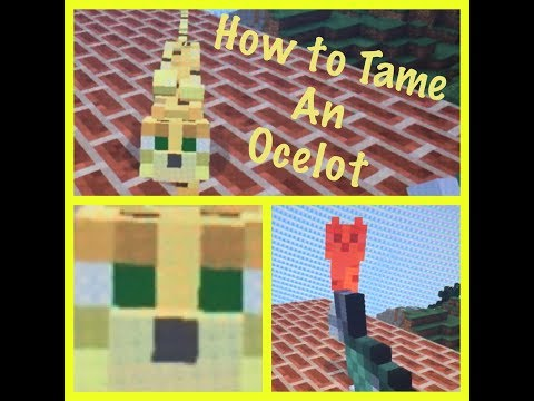 How To Tame an Ocelot