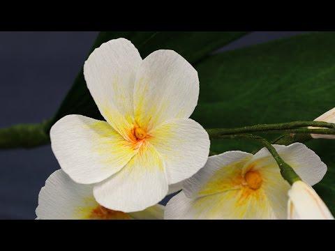 Paper Flower - DIY Plumeria Flower from Duplex Crepe Paper