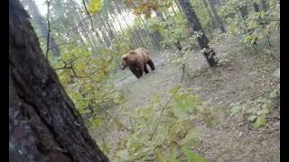 FACE TO FACE WITH A BEAR | OMG