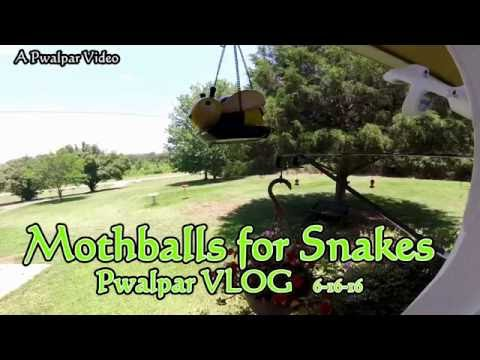 Mothballs for Snakes Pwalpar VLOG 6 16 16