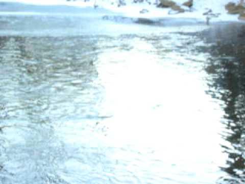 River Bank Fishing ~ Demo ~ Using Planer Bobbers
