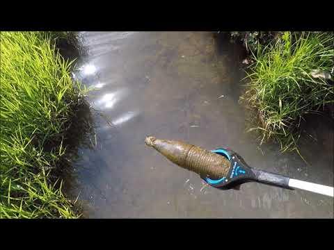 Tiny Creek Treasure Hunt: Muskrats Turtles & Bottles