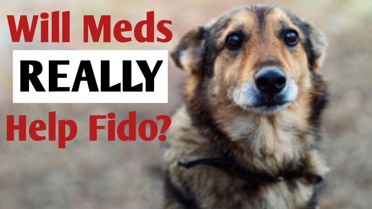 Dog Anxiety Medication: Considering Whether to Put Fido on Behavior Meds