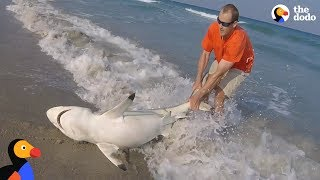 Top 5 Animal Rescues at Sea | The Dodo