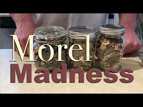 The Be Real - Morel Madness