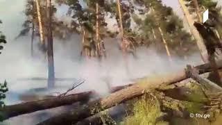 ხანძარი აბასთუმნის ტყეში - ფოტო და ვიდეომასალა