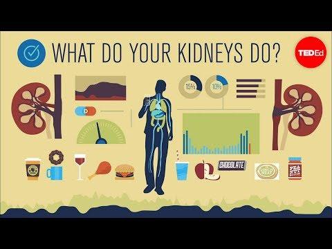 How do your kidneys work? - Emma Bryce