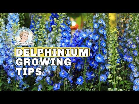 Delphinium Growing Tips // Empress of Dirt