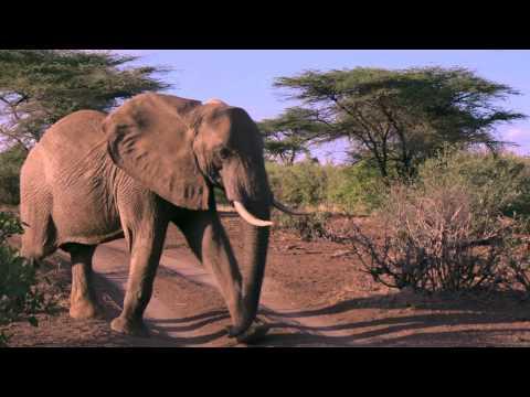Preventing Elephant Poaching at Samburu Reserve