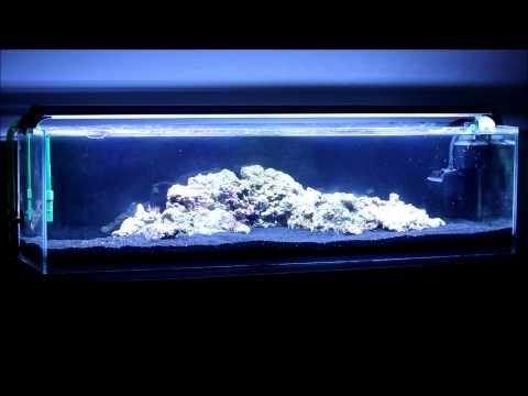 12 Gallon Mr. Aqua Reef Tank - The Start