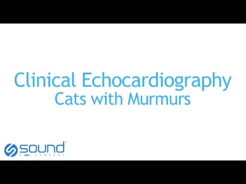 Clinical Echo - Cats with Murmurs