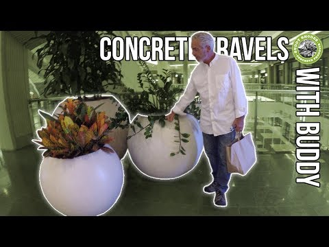 Concrete Travels With Buddy - Episode 5 - San Francisco