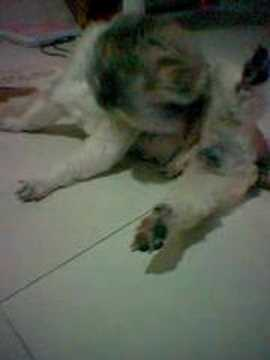 my dog licking
