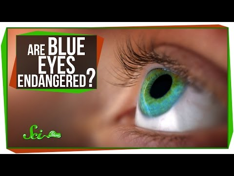 Are Blue Eyes Endangered?