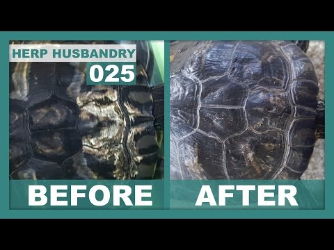 How to Easily Fix Shell Rot in Turtles