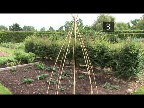 How To Make A Wigwam Support For Runner Beans