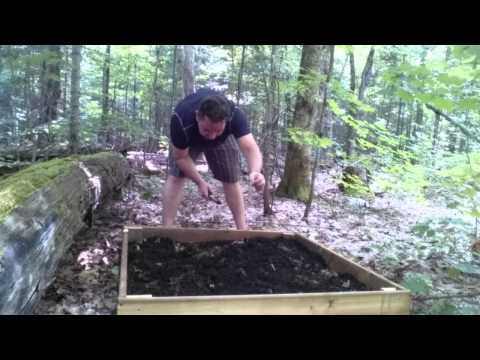 Forest farming: planting wild leeks (ramps) and growing wasabi in a forest