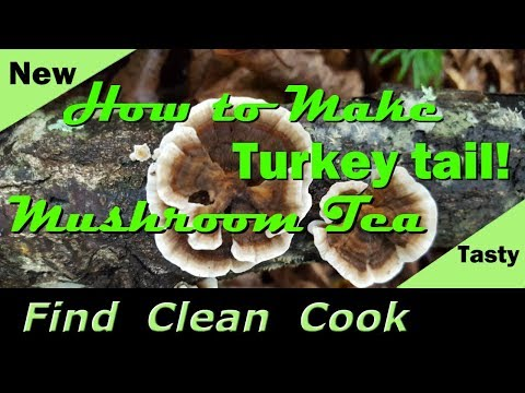 Turkey Tail Mushroom Tea! - Find Clean Cook - Identification - Health - How to make Turkey Tail Tea