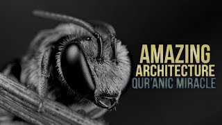Honeybees - Amazing Architecture  (Miracle of Quran)