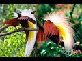Download lagu Fauna fauna yang fenominal di alam liar