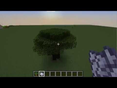 How To Grow Dark Oak Trees in Minecraft