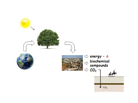 biorefineries: development and perspectives as CCS machines