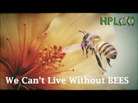 Why bees are important to humans?