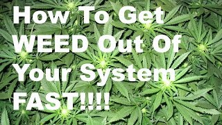 How To Get Weed Out Of Your System Fast Scientifically