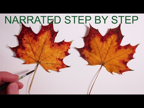 How to Draw a Leaf: Realistic Drawing