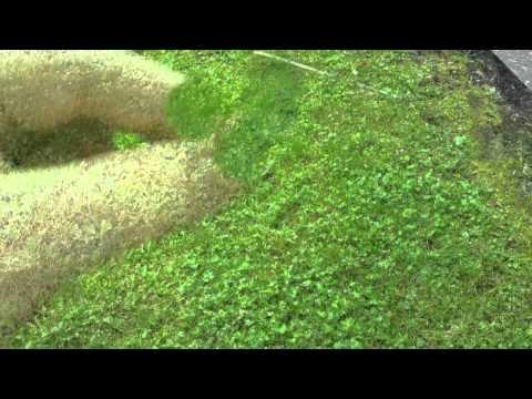 Finding 4-Leaf Clovers