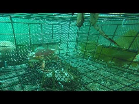 Catching Shrimp - Filmed by GoPro