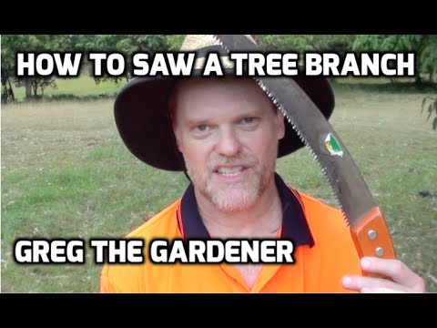 How To Saw a Tree Branch Off - Right and Wrong way Demonstration - Greg The Gardener