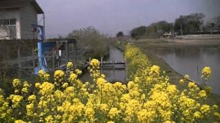 4月13日(金) 養老川西広堰&西広農村公園