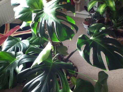 Chemical based Leaf shine for my Plants?