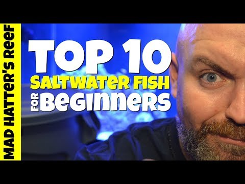 Top 10 Saltwater Fish For Beginners