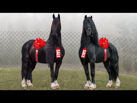 Xxx Mp4 These Are 10 Most Expensive Horse Breeds 3gp Sex