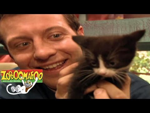 🐒 Zoboomafoo 137 - Cats | HD | Full Episode🐒 🐱 - PakVim