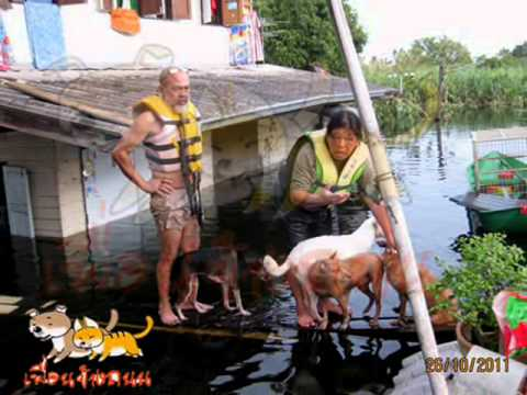 Rescue Poor Animal from flashflood by Khun Bee and Khun Pa dot Com
