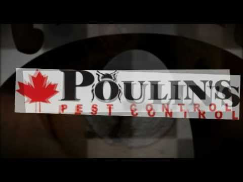 Poulin's - Bed Bugs in Hotels