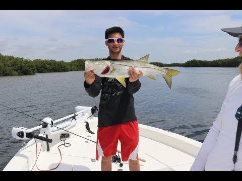 Tampa,Florida. Inshore Fishing. Snook, Redfish, Trout, Jack crevalle