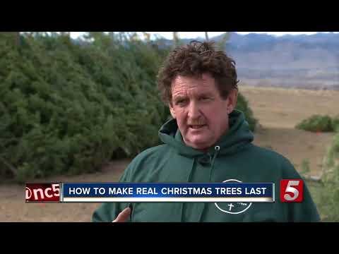 How To Make Real Christmas Trees Last