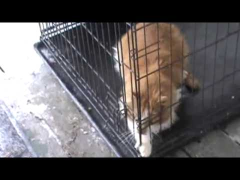 trapped feral cat 021614