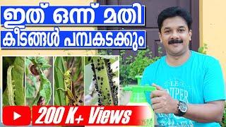 പച്ചക്കറികളിലെ കീട നിയന്ത്രണം ഏറ്റവും ചെലവുകുറഞ്ഞ രീതിയിൽ | Natural Pest Control at Home