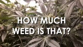 How Much Weed Is That