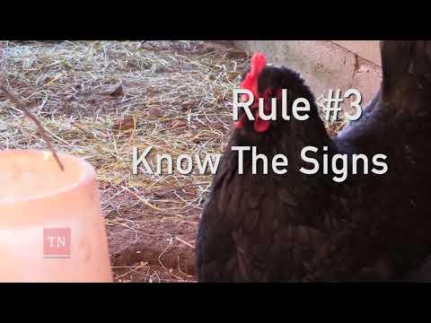 Keeping Your Backyard Flock Safe From Avian Influenza