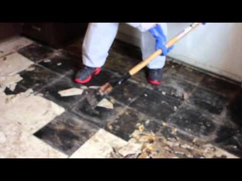 Dog feces & urine cleanup on tiles