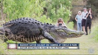 Only in Florida: Video of HUGE gator in Lakeland goes viral