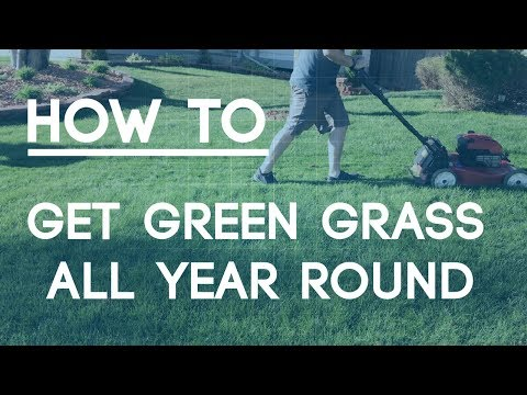 How To Fix An Ugly Lawn - Best Tips for Green Grass