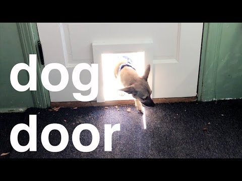 The One True Doggie Door
