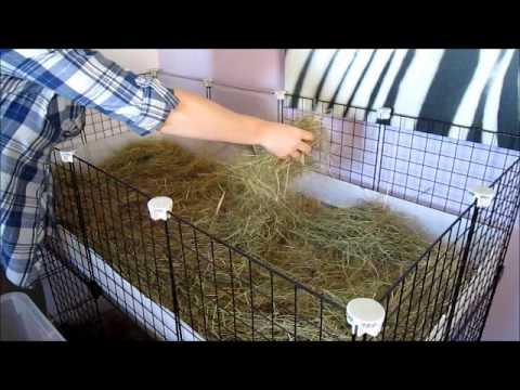 How I clean my Guinea Pig C&C Cage with Megazorb Bedding!